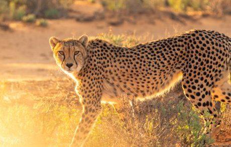 Top 3 lunas de miel en África