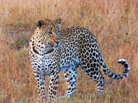 Recomendaciones para viajar a Sudáfrica
