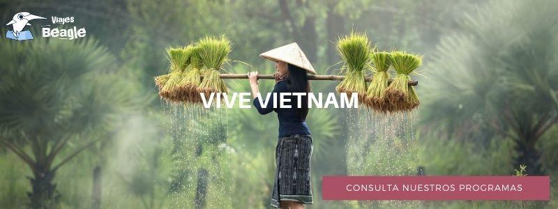 banner descarga vietnam