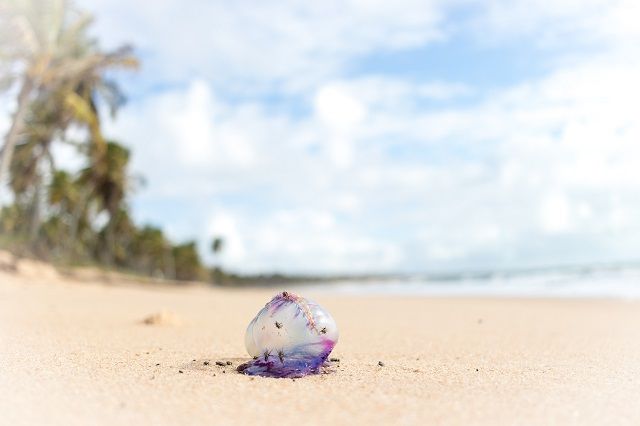 playa medusa brasil