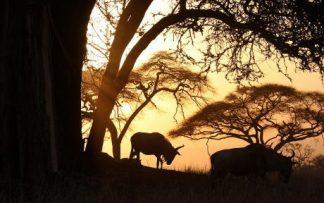 Namibia al atardecer