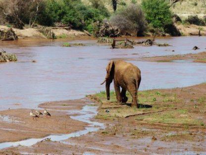 Elefante en el agua