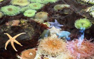 Corales de la Gran barrera de Coral australiana