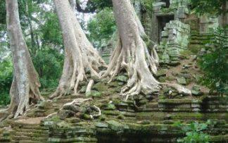 Templos de ANgkor con árboles