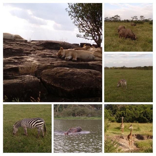 Collage Kenia