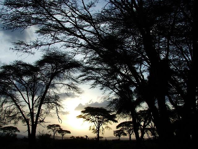 Sabana keniana en 2012