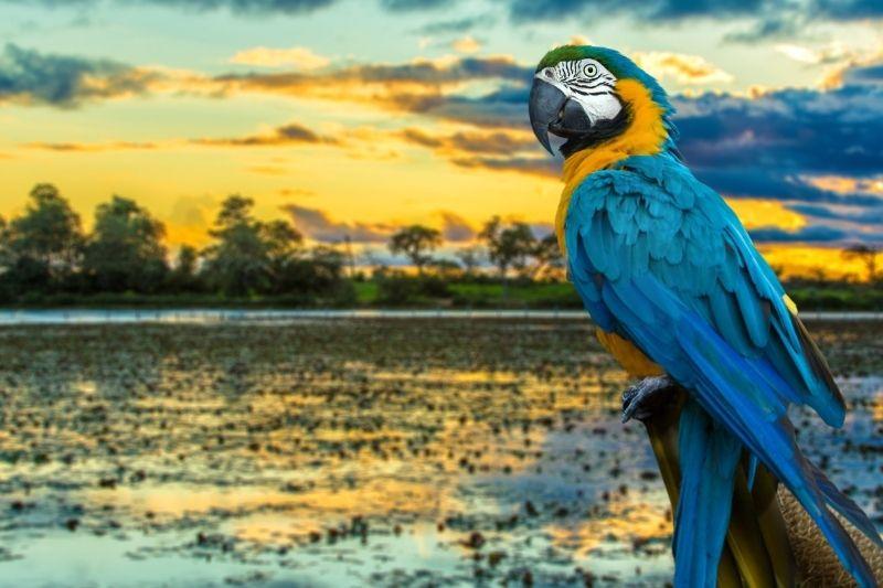 Loro en el Amazonas