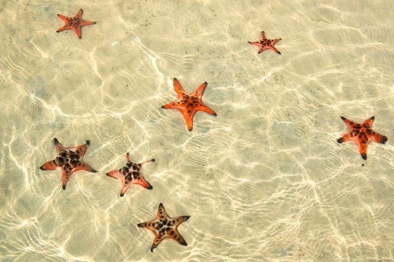 Estrellas de Mar en Phu Quoc