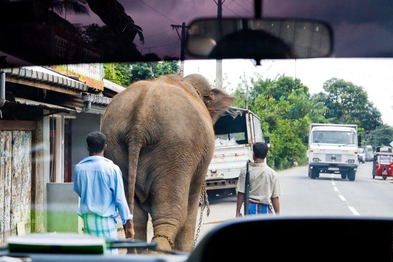 Conducir por Sri Lanka