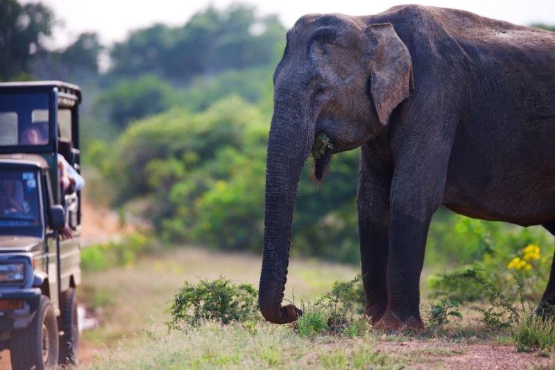 Sri Lanka en safari