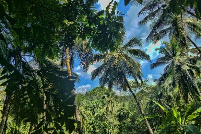 Parques nacionales de Sri Lanka