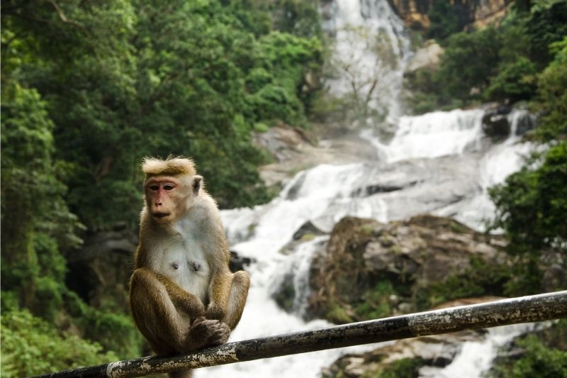 Cascada de Ravana en Sri Lanka